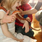Richard the American Ratsnake loves to interact with kids