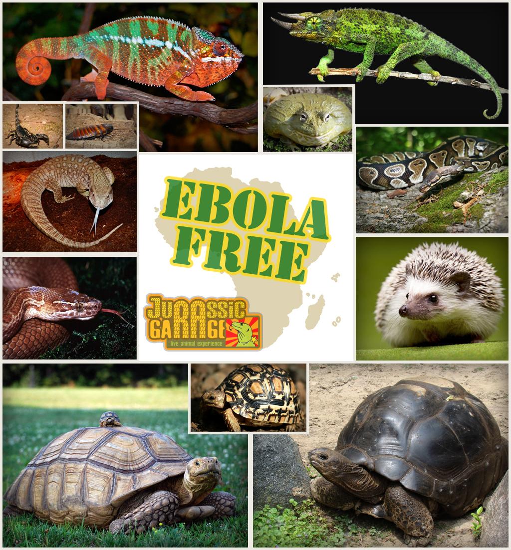 african-species