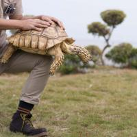 Max the African tortoise