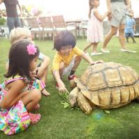 Kids enjoy feeding our African tortoise